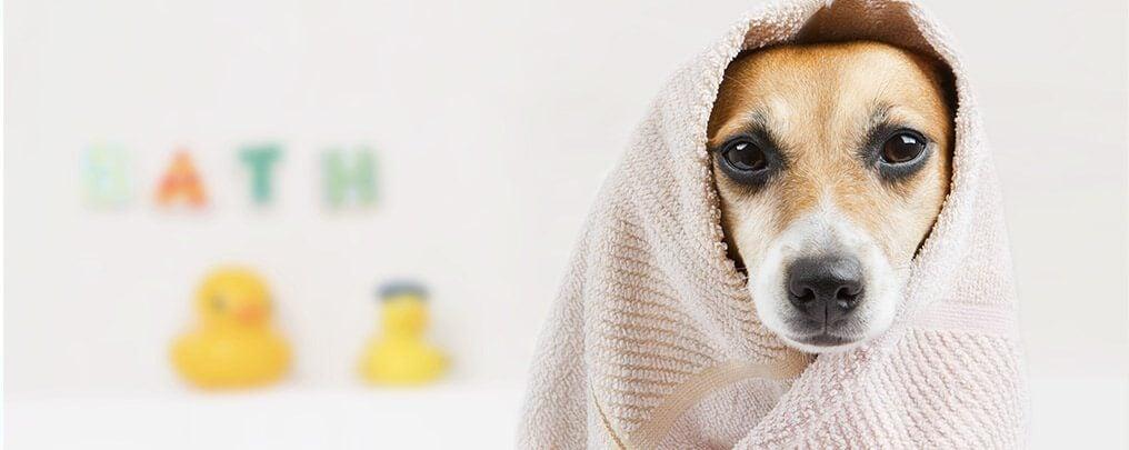 ensure-pets-stay-clean