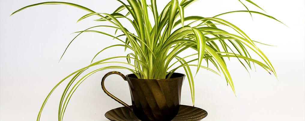 make-use-of-houseplants
