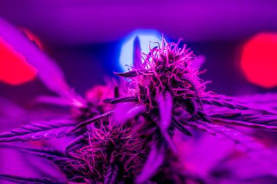 grow-room-lighting-basics