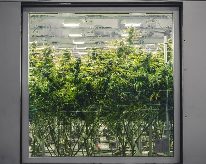 Why Grow Room Ventilation Isn't Enough